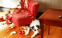 รวมภาพสุดฮา เมื่อน้องหมาพังบ้าน!!
