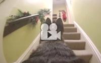 คลิปประทับใจ! เมื่อเจ้าของติดกล้องไว้บนหลังสุนัขขณะไม่อยู่บ้าน