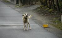 ต้องเช็ก! 10 สัญญาณที่บอกว่าคุณยังไม่พร้อมจะเลี้ยงน้องหมา