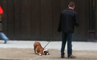 เช็ก! 10  พฤติกรรมผู้เลี้ยงที่ฝึกน้องหมาอย่างไรก็ไม่สำเร็จ!