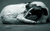ชีวิตสุดอาภัพ!! 8 โรคร้ายที่หมาข้างถนนต้องเผชิญ (ตอนที่1)
