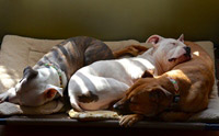 อุทาหรณ์ให้ระวัง! ทิ้งน้องหมาลำพังในบ้านเมื่ออากาศร้อน