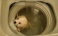 ระวัง! เล่นแผลง ๆ กับน้องหมาอาจสูญเสียพวกเขาไปตลอดกาล