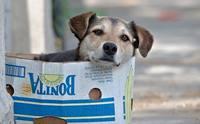 รับน้องหมาไร้บ้านมาเลี้ยงจะต้องเตรียมตัวอย่างไรบ้าง?