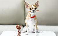 สร้างความรู้สึกดีระหว่างการฝึกให้น้องหมาด้วยขนมสุนัขPRAMA