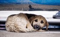 รวมภาพสุดดราม่า! ชีวิตน้องหมาข้างถนน