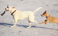 เทคนิคผูกมิตรน้องหมาไร้บ้านตัวใหม่กับหมาบ้านเจ้าถิ่นตัวเก่า