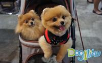 Dogilike �ҷ����ҹ Thailand International Dog Show 2015