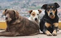 ฮีโร่ข้างถนน ... วีรกรรมของน้องหมาจรจัดที่คุณจะต้องทึ่ง!!