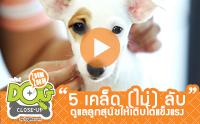 5 เคล็ด (ไม่) ลับดูแลลูกสุนัขให้เติบโตแข็งแรง [Clip]
