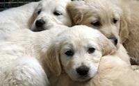 ความผิดปกติของลูกสุนัขที่ผู้เลี้ยงไม่ควรมองข้าม