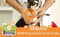 วิธีรับมือสัตว์ที่ทำอันตรายน้องหมาในหน้าฝน [clip]