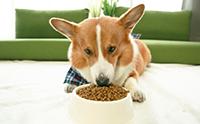ดูแลน้องหมาให้สุขภาพดีด้วย อาหารสุนัข ANF Canine Holistic