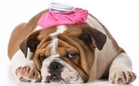 ดูแลลูกสุนัขให้ห่างไกลโรคลำไส้อักเสบติดต่อ
