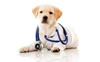 การตรวจสุขภาพเบื้องต้นเมื่อรับลูกหมาใหม่มาเลี้ยง