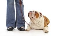 เลี้ยงเจ้าตูบอย่างไร ไม่ให้ฝืนสัญชาตญาณสุนัข !