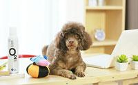 สร้างบรรยากาศหอมสดชื่นให้คุณและน้องหมา ด้วย O2 KLEAN SPRAY
