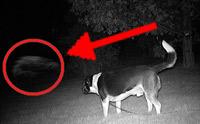 จริงหรือที่ว่า น้องหมาสามารถมองเห็นผีได้!?