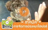10 คำถาม เทคนิคการจัดการน้องหมาไฮเปอร์ [clip]
