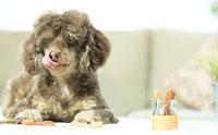 """ดูแลให้น้องหมามีสุขภาพช่องปากและฟันที่ดีได้แค่ใช้ """"ขนมขัดฟัน Whimzees"""""""