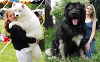 เจาะลึก 5 ค่าใช้จ่ายของน้องหมาไซส์ใหญ่ยักษ์ !