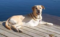 มะเร็งกระดูก โรคร้ายที่ผู้เลี้ยงสุนัขพันธุ์ใหญ่ยักษ์ต้องรู้!!!