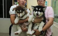 เช็กราคา! 7 น้องหมาสายพันธุ์ยักษ์ใหญ่สุดฮิตในไทยตอนนี้