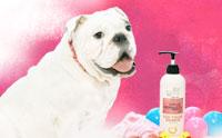 ให้น้องหมาตัวหอมเหมือนเด็กน้อยด้วย Forcans Baby Powder Shampoo