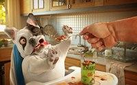 โรคพันธุกรรมในน้องหมาที่ต้องดูแลโภชนาการเป็นพิเศษ