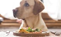 เสริมแร่ธาตุยังไงให้ร่างกายน้องหมาได้ประโยชน์