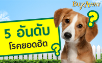 5 อันดับโรคยอดฮิตใกล้ตัวสุนัข ป้องกันได้ ง่ายนิดเดียว!