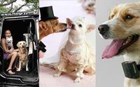 10 สินค้าและบริการสำหรับน้องหมาสุดฮิตที่อดีตไม่เคยมีมาก่อน !