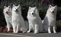 รวมพล 10 สายพันธุ์ น้องหมาที่เก่าแก่ที่สุดในโลก!!