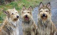 เผย! 3 สายพันธุ์น้องหมาใหม่ล่าสุดปี 2015 น่าเลี้ยงมากกกกก
