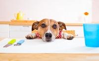 5 โรคน่าสนใจในน้องหมา จากรายงานสุขภาพประจำปี 2015