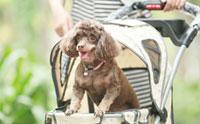 พาน้องหมาเที่ยวสนุกได้ทุกที่ด้วยรถเข็นน้องหมา ibiyaya