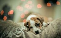 5 สาเหตุที่ทำน้องหมามีค่าเอนไซม์ตับขึ้น
