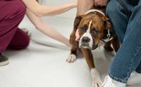 5 เทคนิคพาน้องหมาไปหาหมออย่างไรไม่ให้หวาดกลัว