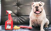จัดการคราบและกลิ่นสกปรกจากน้องหมาด้วย สเปรย์ Nature�s Miracle Advanced