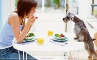 เช็กลิสต์! 6 พฤติกรรมของผู้เลี้ยงที่ดูเหมือนจะรักน้องหมา ...