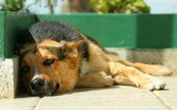 5 เรื่องจริงของโรคคูชชิ่ง (Cushing�s syndrome) ในน้องหมา