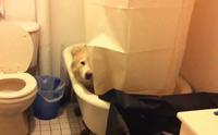 5 สุดยอดกลยุทธ์ หลอกน้องหมาอาบน้ำให้สำเร็จ