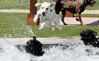 10 คำถามเกี่ยวกับน้ำที่ผู้เลี้ยงน้องหมาจำเป็นต้องรู้!