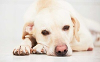 ตามหาสาเหตุของอาการ ซึม ของน้องหมาว่าเกิดจากอะไรบ้าง?