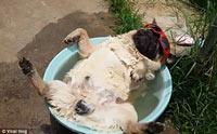 6 วิธีเกรียน ๆ  จัดการปัญหาพฤติกรรมน้องหมาด้วยน้ำ (แต่ได้ผลนะ)
