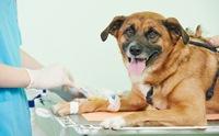 น้องหมาป่วยภาวะไตวาย ทำไมต้องให้สารน้ำ?