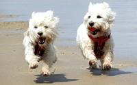7 สุดยอดเทคนิคดูแลสุนัขขนยาวในช่วงอากาศร้อนสุด ๆ