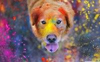 ระวัง!! พิษโลหะหนักที่ผสมมากับสี ทำอันตรายกับน้องหมาได้