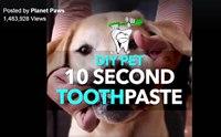 ใช้ Baking soda กับฟันน้องหมา ปลอดภัยจริงหรอ?
