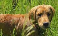 4 พฤติกรรมน้องหมาทำความสะอาดร่างกายได้ด้วยตัวเอง